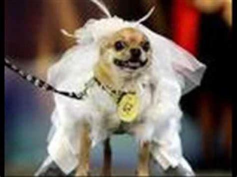 imagenes de animales graciosos perros y gatos chistosos nuevo youtube