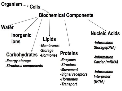 3 ways carbohydrates are used by cells what elements make up carbohydrates lipids proteins and