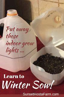 winter sowing     images indoor grow
