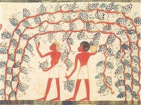 vasi funerari egizi un altra bevanda specie nelle zone dove non si produceva
