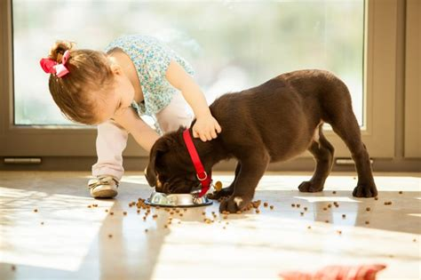 when to stop feeding puppy food stop feeding puppy food dogtime