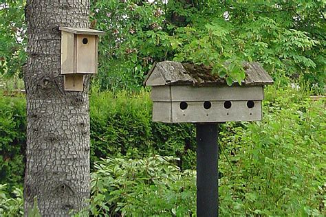 how to hang a bird house mounting a nesting box