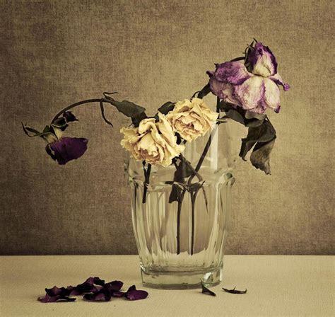 imagenes de flores marchitas m 225 s de 25 ideas incre 237 bles sobre flores marchitas en
