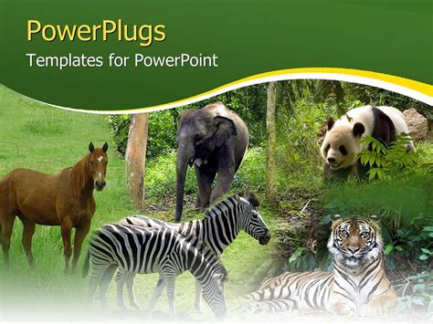Powerpoint Template Five Tiles Showing Different Animals Free Animal Powerpoint Templates