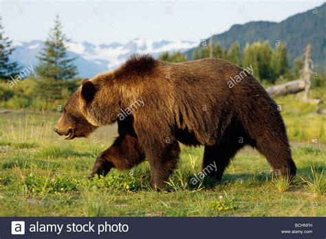 another summer the yellowstone park and alaska classic reprint books brown walking in meadow captive ak sc summer big