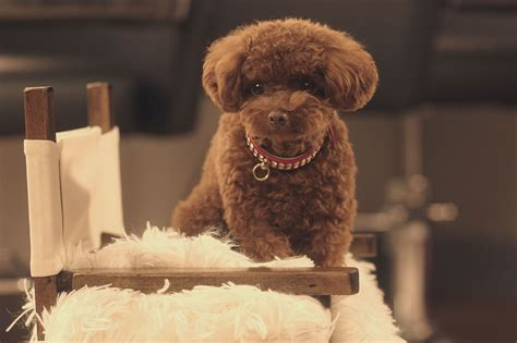 katy perry puppy katy perry nugget ad and pets in commercials