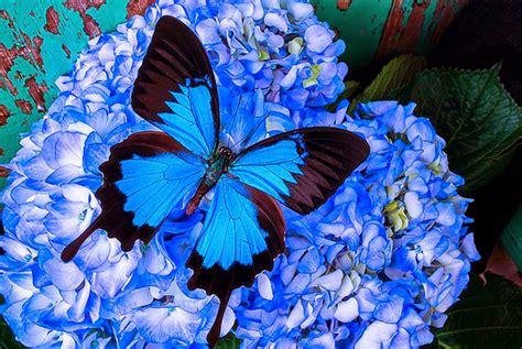 flores azules claras mariposa imagenes de archivo imagen 2050474 cuadros modernos pinturas y dibujos mariposas y flores
