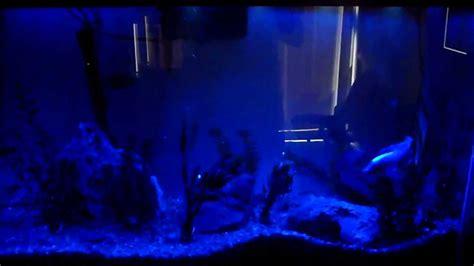 marineland hidden led lighting system 21 length maxresdefault jpg