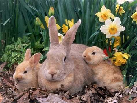 6 Cute Bunny Rabbit Easter Wallpapers for Desktop   Free