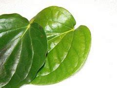 Betel Leaf Daun Sirih Essential 5ml paan betel leaves basics and economics in indian scenerio