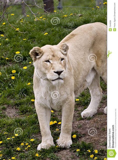 imagenes libres animales animales salvajes fotos de archivo libres de regal 237 as