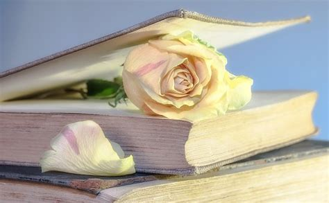 roses books books free pictures on pixabay