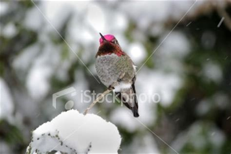 frozen food for hungry hummingbirds resolved ask