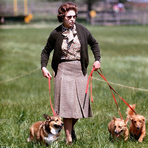 queen elizabeth corgis fascinating pictures show queen in every year of her reign