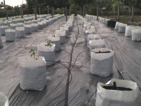 Filter Fertigasi 3 bestway agro plantation fertigasi cili fertigasi