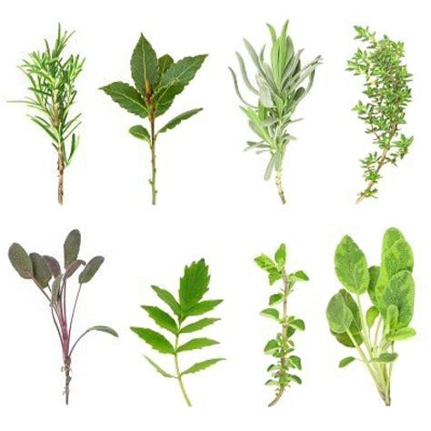 les herbes aromatiques en cuisine fines herbes
