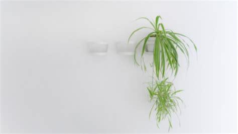 jenis tanaman hias  cocok sebagai penghias kamar