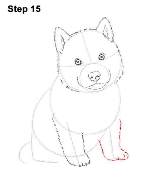 how to a husky puppy how to draw a puppy husky