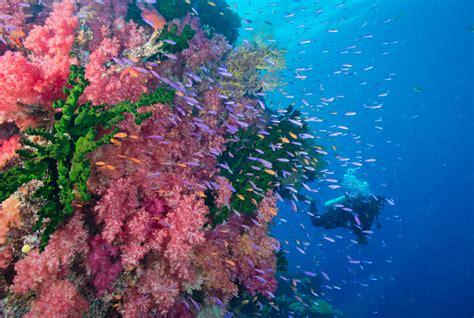 dive fiji scuba diving at matangi island resort fiji