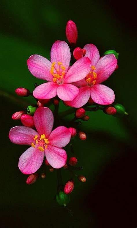 Free Beautiful Exotic Flowers images HD Wallpaper APK