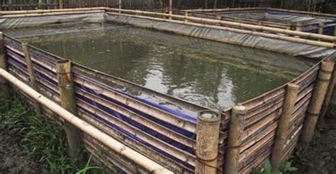 Pakan Ikan Lele Pf 500 bagaimana cara budidaya ikan lele di kolam terpal mata