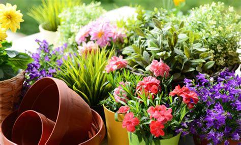 il fiore di maggio i fiori di maggio quali fioriscono e quali coltivare leitv