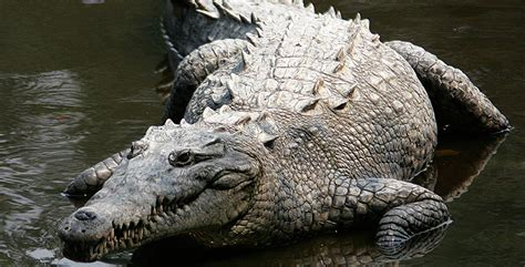 top 25 most dangerous animals in the world pouted online pics for gt dangerous animals