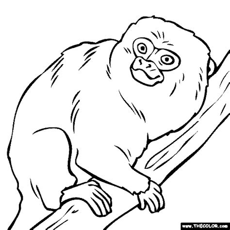 marmoset monkey coloring page free online coloring pages thecolor