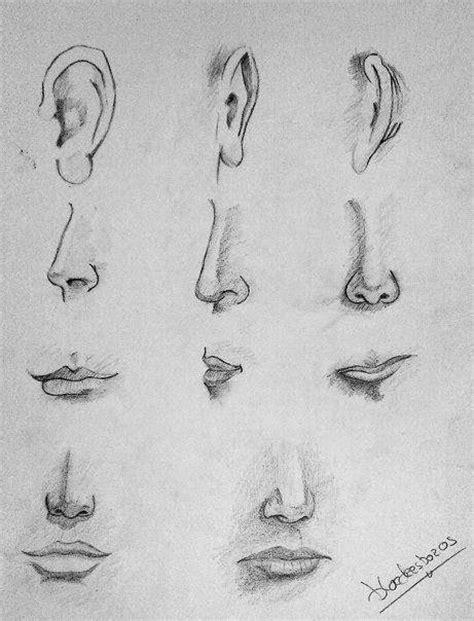 imagenes de narises a lapiz pasos para dibujar una nariz de mujer aprender a dibujar