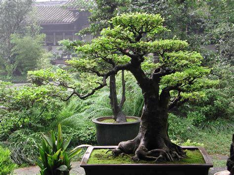 top unique bonsai trees gallery top unique bonsai trees