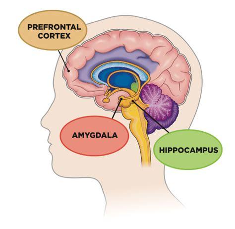 Brain Stress - the mechanics of stress response strong medicine