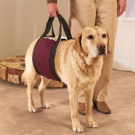 comfort pets special dog lift for stairs invisibleinkradio home decor