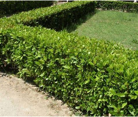 piante da giardino prezzi prezzi piante da giardino on line home visualizza idee