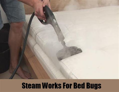 steam bed bugs 12 herbal remedies for bed bugs how to cure bed bugs