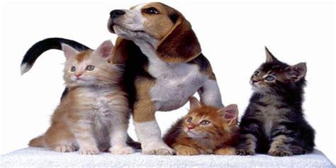 alimenti biologici per cani etichettatura di alimenti biologici per animali da compagnia