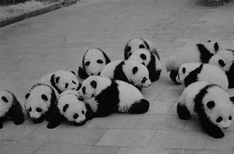 Flat Teplek Polos Black Panda adorable panda i panda jennamadnessskemo