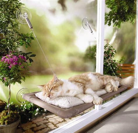 amaca gatto 5 gadget per gatti li faranno veramente felici casa it