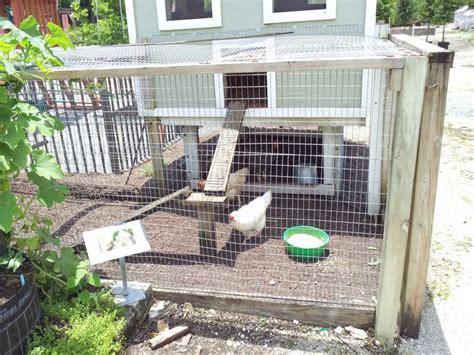 backyard chickens jacksonville fl 28 images hurricane