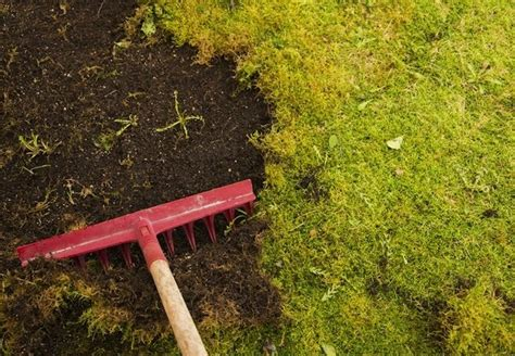 how to grow moss bob vila