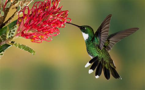 hummingbird festival this weekend at beaver dam state park