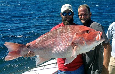 yankee star charter boat orange beach charter fishing gulf shores deep sea