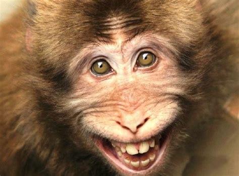 imágenes muy graciosas de animales septiembre 2011 blog de la tele