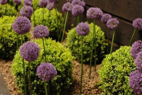 Contemporary Garden Plants Homeofficedecoration Contemporary Garden Plant Ideas