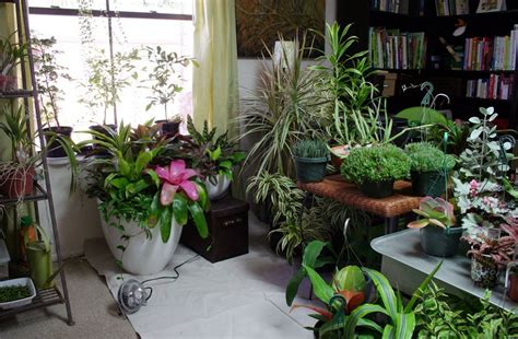 indoor gardening ideas indoor gardening ideas to best free home design idea