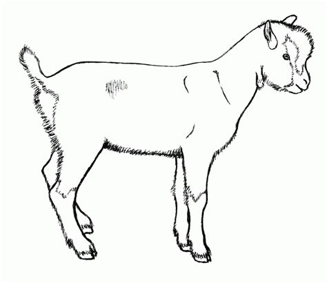 realistic goat coloring page goat drawings rubystar dairy goats coloring home