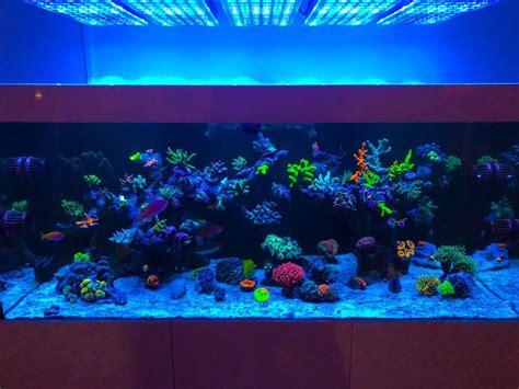 aquarium led lighting orphek aquarium led lighting