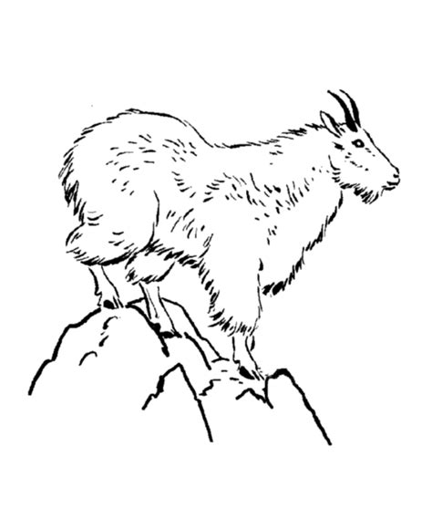 coloring pages mountain goat wild animal coloring page mountain goat coloring page