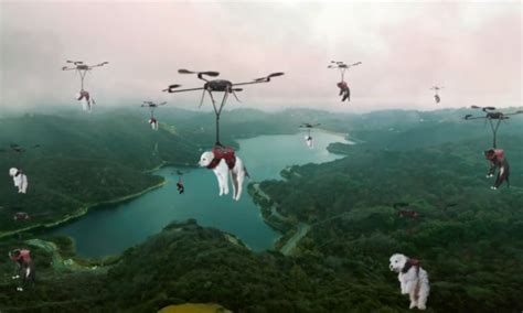 pug drone can t make it to the shelter get your new delivered by drone barkpost