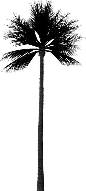 silhouette palm tree  image  pixabay