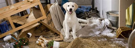 how to puppy proof a house veterinarian new puppy checklist